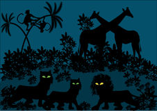 Cartoon illustration of jungle by night Royalty Free Stock Image