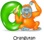Cartoon illustration of O Letter for Orangutan Royalty Free Stock Photography