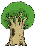 Cartoon illustration of oak Stock Photos