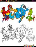 Cartoon parrots characters coloring book Stock Images