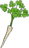 Parsley root vegetable cartoon illustration Stock Image