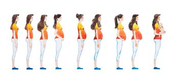 Cartoon illustration of pregnancy stages. Side view image of pregnant woman showing changes in her body Stock Images