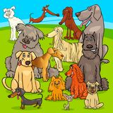 Breed dogs cartoon characters group. Cartoon Illustration of Purebred Dogs and Puppies Animal Characters Group Stock Photo
