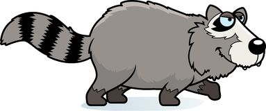 Cartoon Raccoon Stalking. A cartoon illustration of a raccoon stalking Royalty Free Stock Images