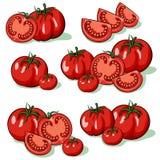 Set of tomatoes stock illustration