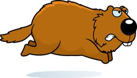Angry Cartoon Woodchuck. A cartoon illustration of a woodchuck angry and running Stock Photo