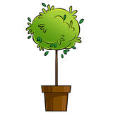 Cartoon illustration of young green tree plant growing in pot Royalty Free Stock Images