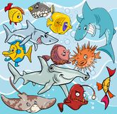Fish cartoon animal characters group. Cartoon Illustrations of Fish Sea Life Animal Characters Group Royalty Free Stock Photography