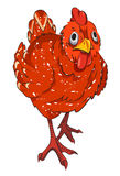 Cartoon image of chicken Royalty Free Stock Images