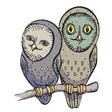 Cartoon image of cute owls Royalty Free Stock Images