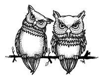 Cartoon image of cute owls Royalty Free Stock Photos