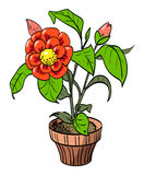 Cartoon image of house plant Royalty Free Stock Photography