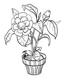 Cartoon image of house plant Stock Photography