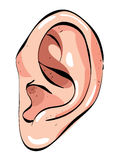 Cartoon image of human ear. An artistic freehand picture Royalty Free Stock Photography