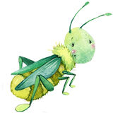 Cartoon insect grasshopper watercolor illustration.