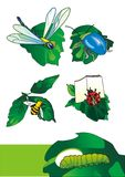 Cartoon insects. EPS Vector illustration of a insects (it can be used as an illustration for the children's book Royalty Free Stock Photo