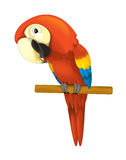 Cartoon isolated animal - parrot sitting looking and resting Stock Photo