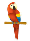 Cartoon isolated animal - parrot sitting looking and resting Royalty Free Stock Images