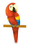 Cartoon isolated animal - parrot sitting looking and resting Stock Image