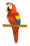 Cartoon isolated animal - parrot sitting looking and resting Stock Photography