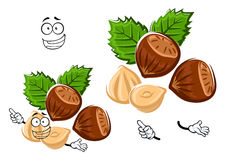 Cartoon isolated hazelnut with brown nuts Royalty Free Stock Photography