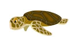 Cartoon isolated sea turtle Royalty Free Stock Photo
