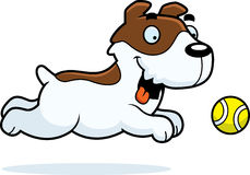 Cartoon Jack Russell Terrier Chasing Ball Royalty Free Stock Photo