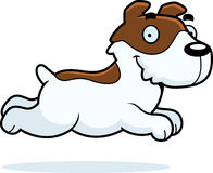 Cartoon Jack Russell Terrier Running Royalty Free Stock Photos