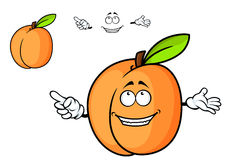 Cartoon juicy apricot fruit Stock Images
