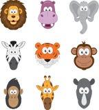 Cartoon jungle savannah animals faces Royalty Free Stock Photo