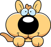 Cartoon Kangaroo Peeking Stock Photos