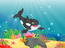 Cartoon killer whale with a beautiful underwater world. Vector illustration of cartoon killer whale with a beautiful underwater world Royalty Free Stock Images