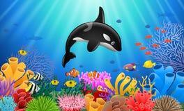Cartoon killer whale Royalty Free Stock Photo