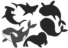 Cartoon killer whale. Find the right shadow image. Educational games for kids.Vector stock illustrationr Stock Photo