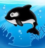 Cartoon killer whale in sea Stock Photos