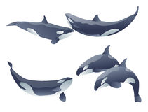 Cartoon killer whales. Set of cartoon killer whales show on white. vector illustration Stock Photography