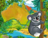 Cartoon koala bear with continent map Stock Image