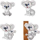 Cartoon koala collection set Stock Image