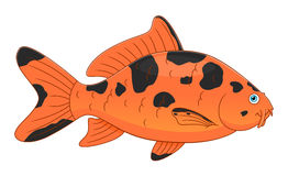 Cartoon koi carp. Cartoon cute koi carp isolated on white background Stock Photos