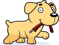Cartoon Labrador Leash Royalty Free Stock Photography