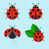 Cartoon ladybug vector set. From the background. Cute ladybug on a leaf or flying in a flat style. Symbols funny insects and beetles stock illustration