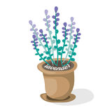 Cartoon lavender in pot . Flat vector illustration. Fragrant violet flowers on white background. Decorative home plant Stock Photography