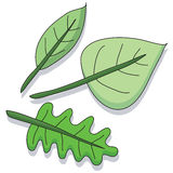 Cartoon leaf Stock Images