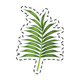 Cartoon leave palm tropical flora. Vector illustration eps 10 Stock Images