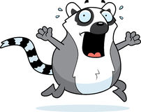 Cartoon Lemur Panic Royalty Free Stock Photos