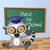 Cartoon Lemur wrote in classroom Royalty Free Stock Images
