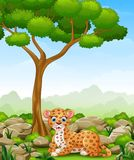 Cartoon leopard lay down in the jungle Stock Photos