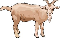 Cartoon light brown goat Royalty Free Stock Images