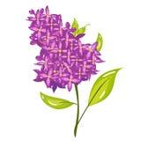 Cartoon Lilac Spring Flower Illustration. Vector cartoon lilac spring flower illustration Stock Images