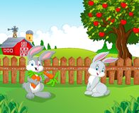 Cartoon little bunny in the farm Stock Images